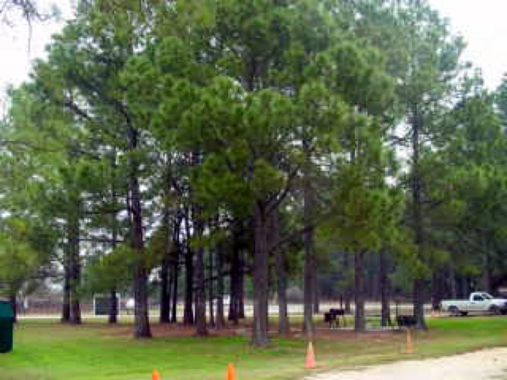 Midway Pines Rv Park - Granbury, TX - Campgrounds