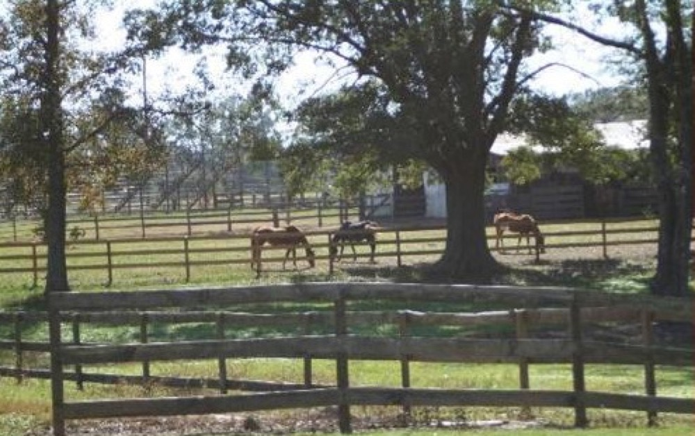 Sweetwater Campground Ranch & Stables - Loranger, LA