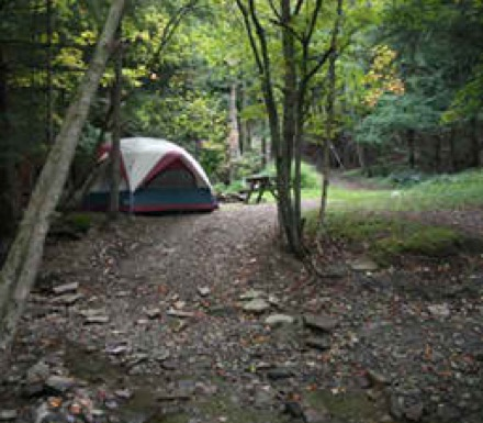 Campgrounds In Dansville New York Camp Native
